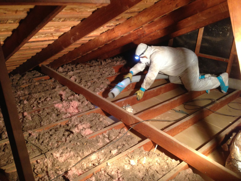 damaged-attic-insulation