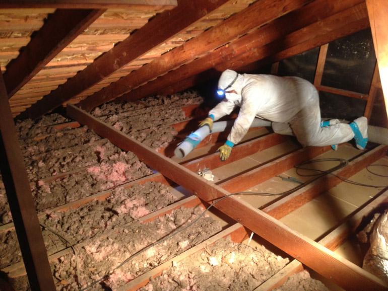 damaged-attic-insulation