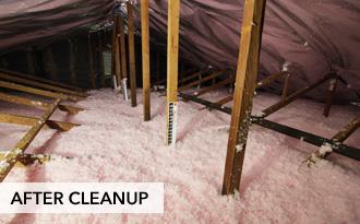 San Diego Attic Insulation Company Attic Cleaning