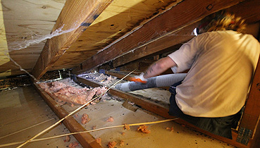Home Insulation Removal